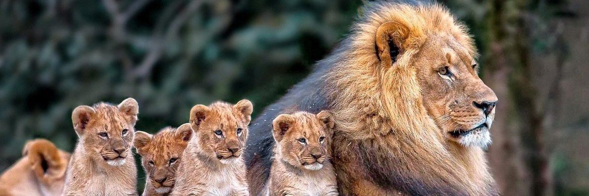 kaartjes ouwehands dierenpark rhenen