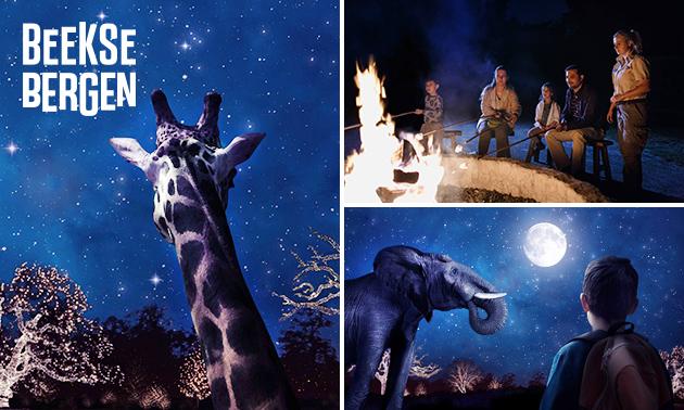 Safaripark Beekse Bergen Winterdroom KORTING!!